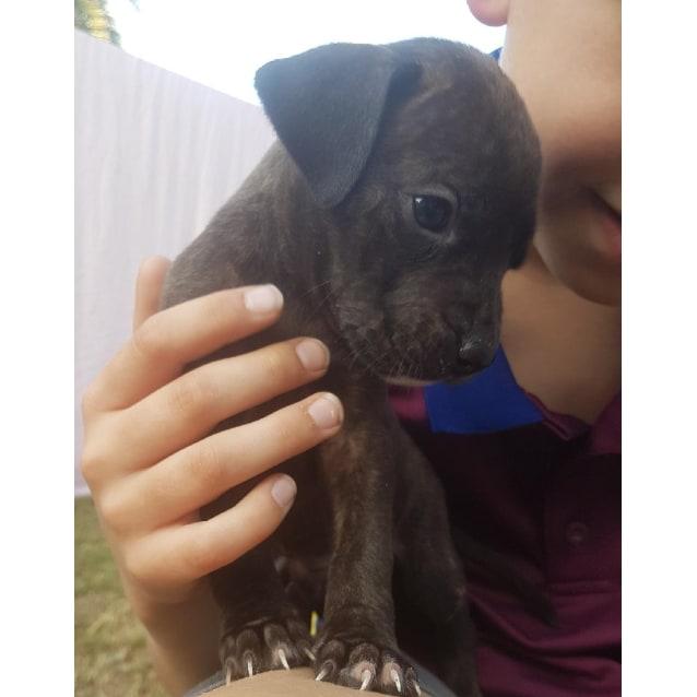 Photo of C Pups