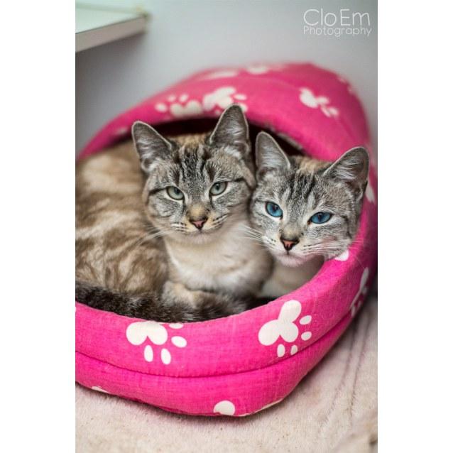 Photo of Cuddles