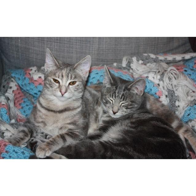 Photo of Mahalia And Mo (Maurice)