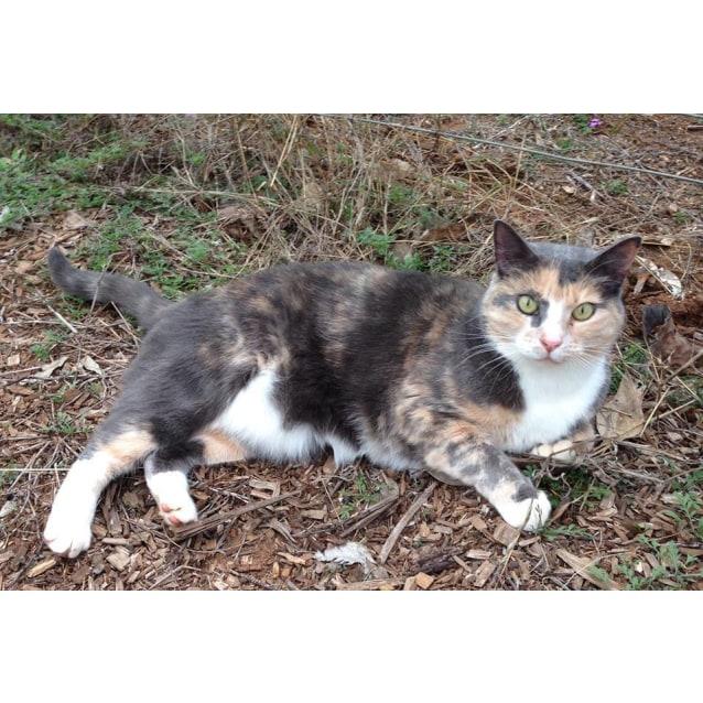 Photo of Kittee