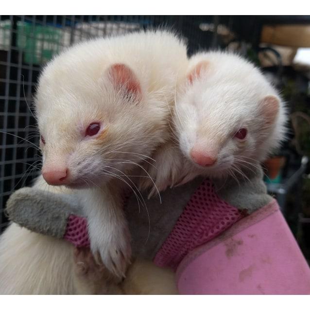 Photo of Jawselyn & Kilian