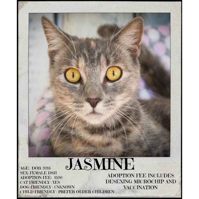 Photo of Jasmine