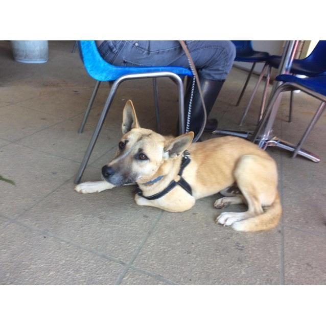 Photo of Diago Dingo X