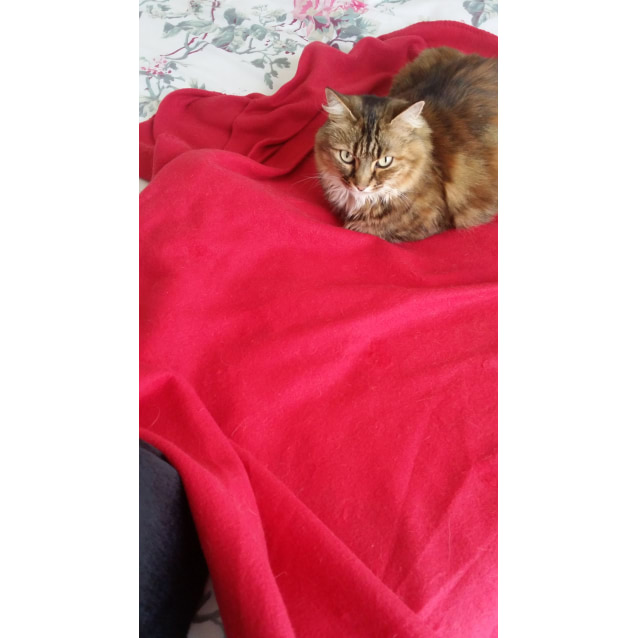 Photo of Phoebe (Located In Northcote)