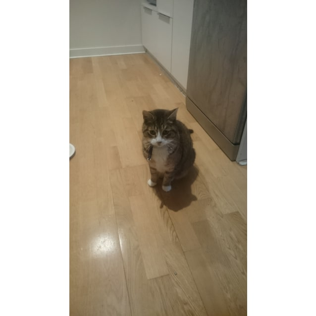 Photo of Tiger (Located In Pascoe Vale)