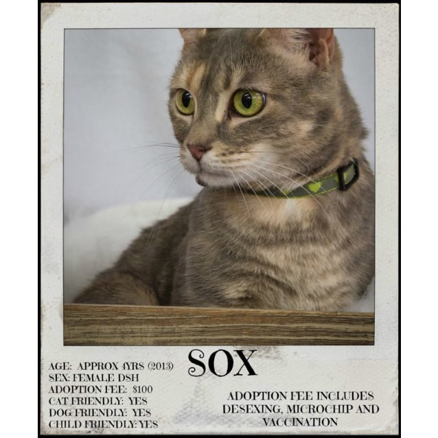 Photo of Sox