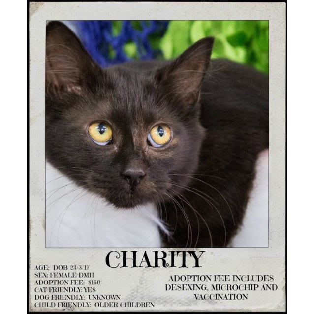 Photo of Charity