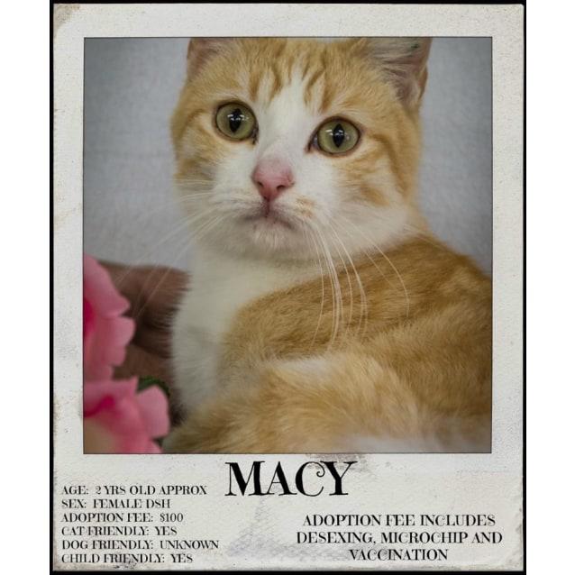 Photo of Macy