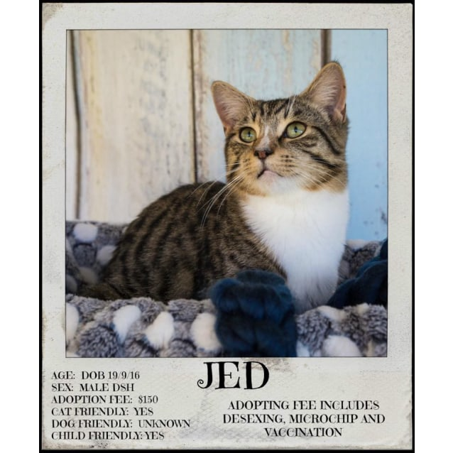 Photo of Jed