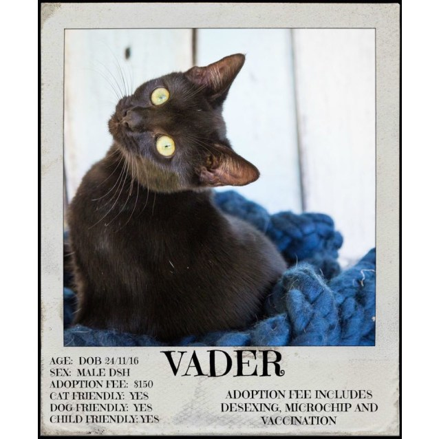 Photo of Vader