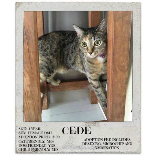 Photo of Cede