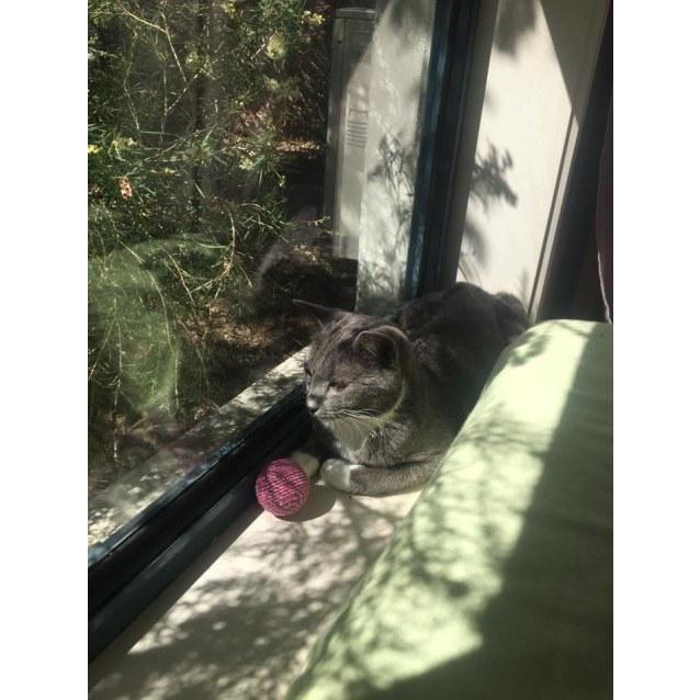 Photo of Willa