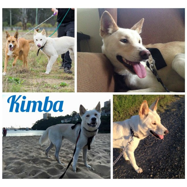 Photo of Kimba Dingo