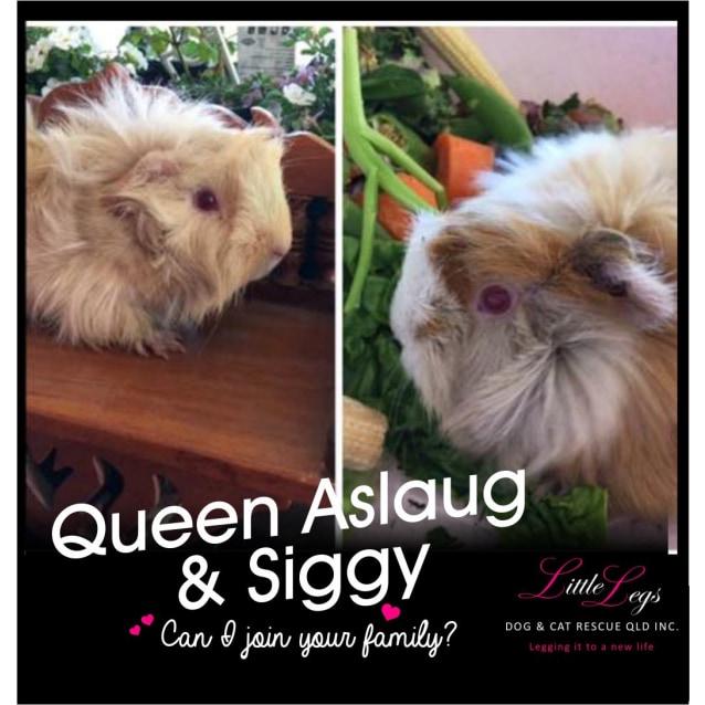 Photo of Queen Aslaug & Siggy