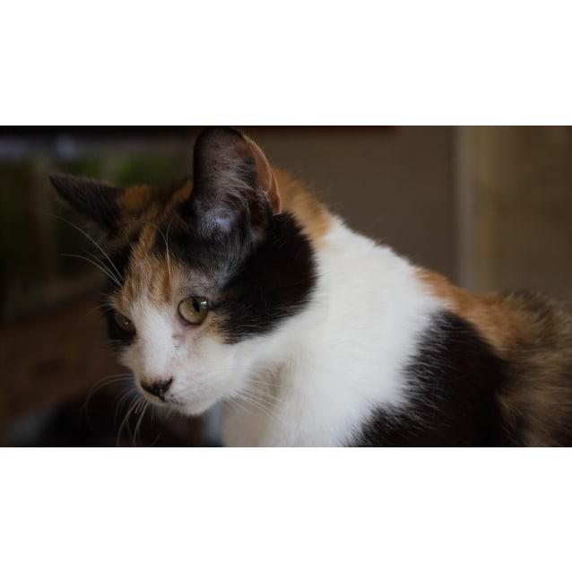 Photo of Hallie