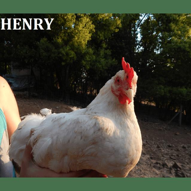 Photo of Besty & Henry