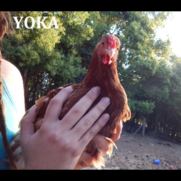 Photo of Yoka, Ember & Bruschetta
