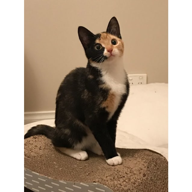 Photo of Bonnie. Pretty, Shy Sweetheart