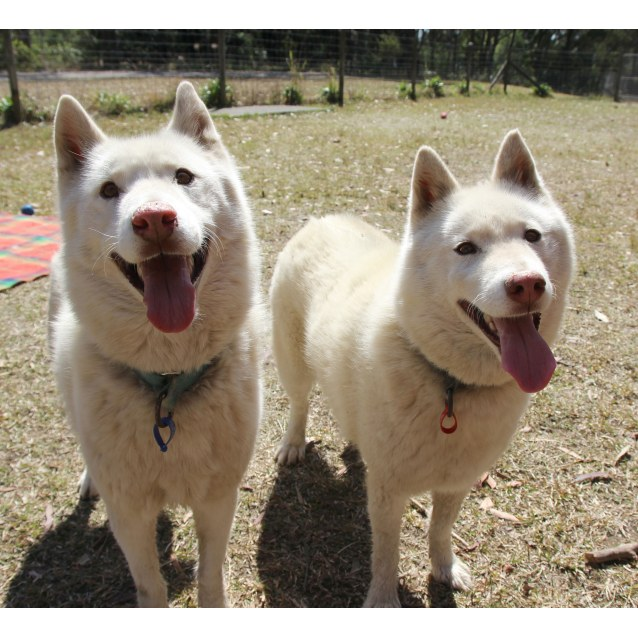 Photo of Thor And Aura ~ Adorable Twins