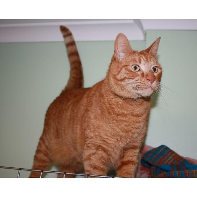 Photo of Othello