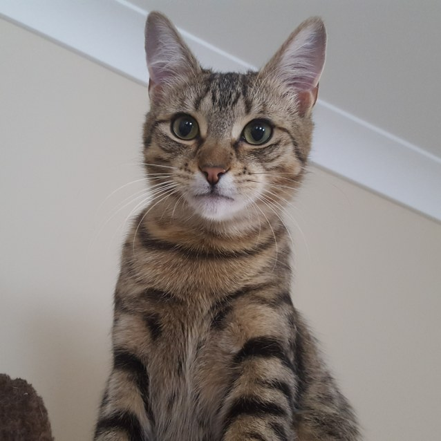 Photo of Cosmo (Located In South Morang)