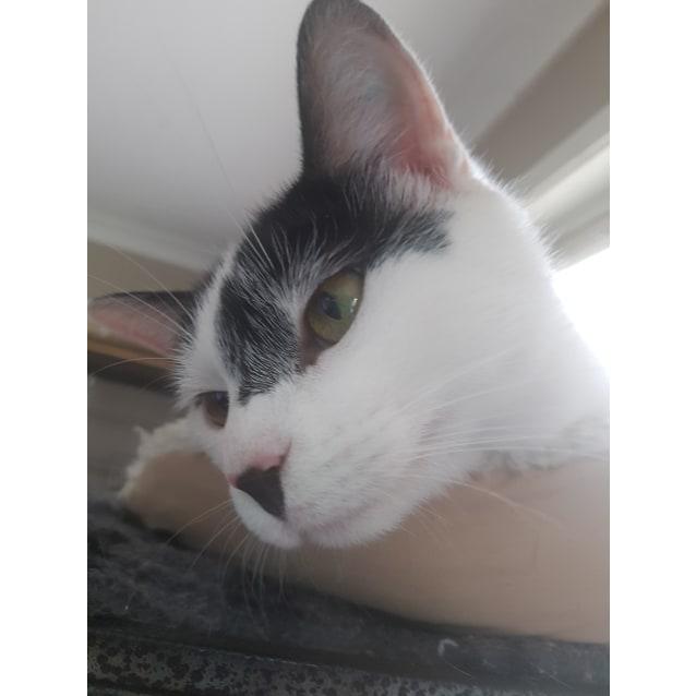Photo of Dimity
