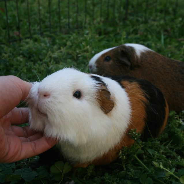 Photo of Munchies And Snickers