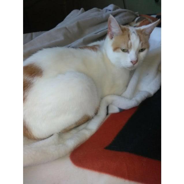 Photo of Mumma Kat