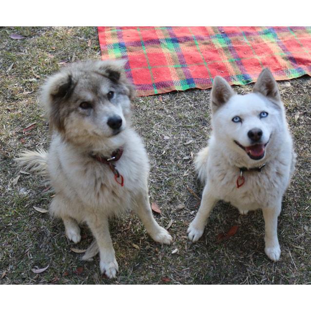 Photo of Crystal & Skye ~ Bonded Pair