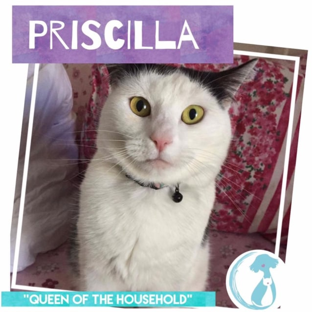 Photo of Priscilla *Limited Time Valentines $50 Fee*