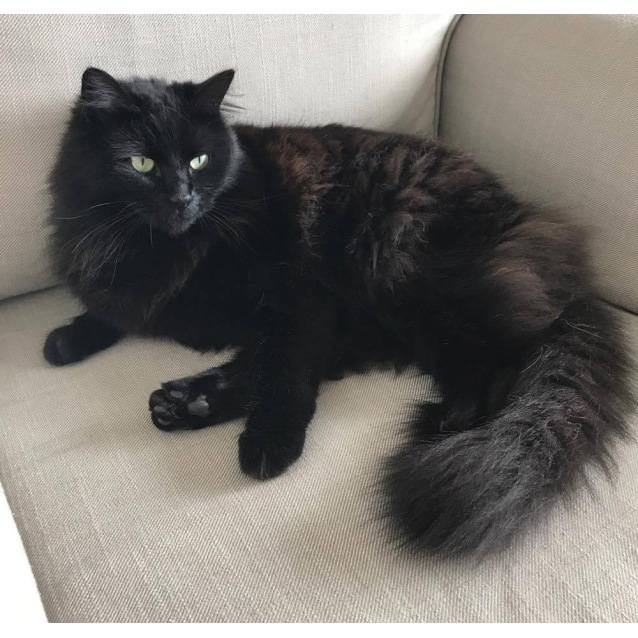 Adopted Black Cat Pound