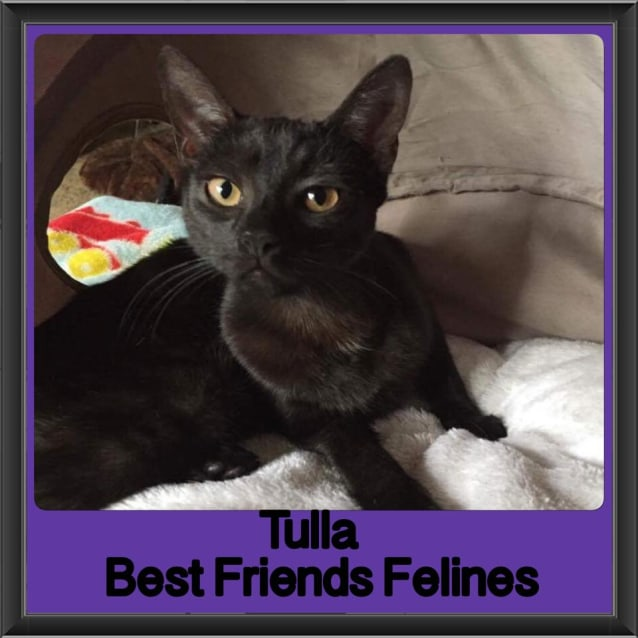 Photo of Tulla