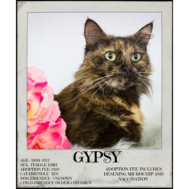 Photo of Gypsy