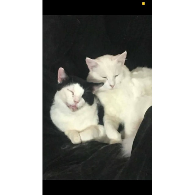 Photo of Hugo & Milky