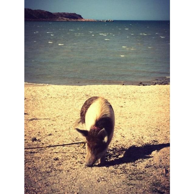 Photo of Babi