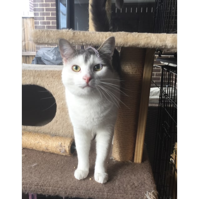 Photo of Rhea *Foster To Adopt* (Located In Diggers Rest)
