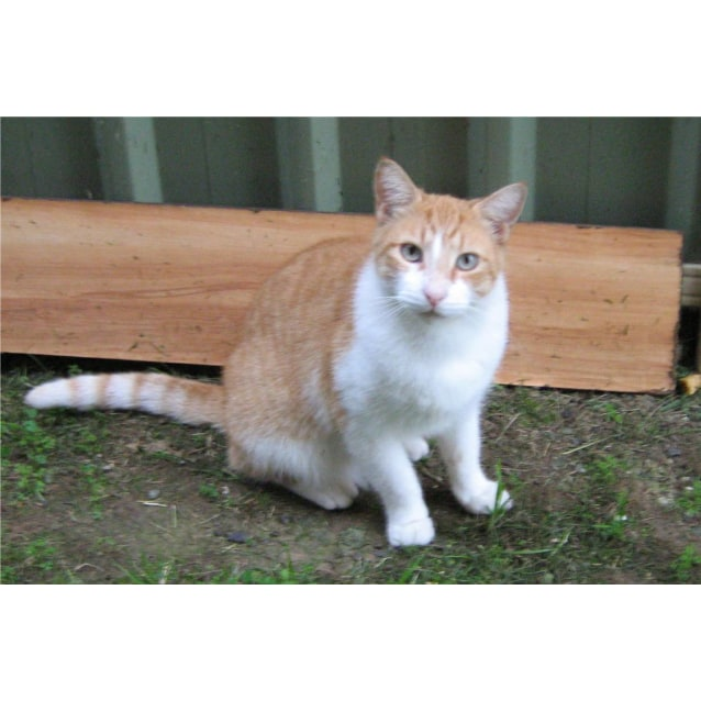 Photo of Ruben Aka Gingie