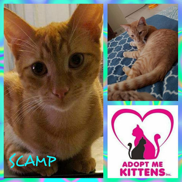 Photo of Scamp
