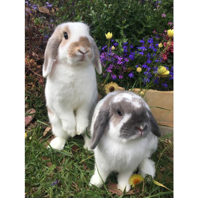 Photo of Jaffa & Amber