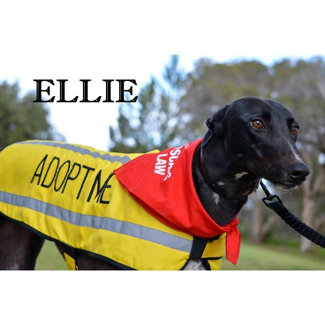 "Photo of ""Elle"", Almost Famous. Melbourne."