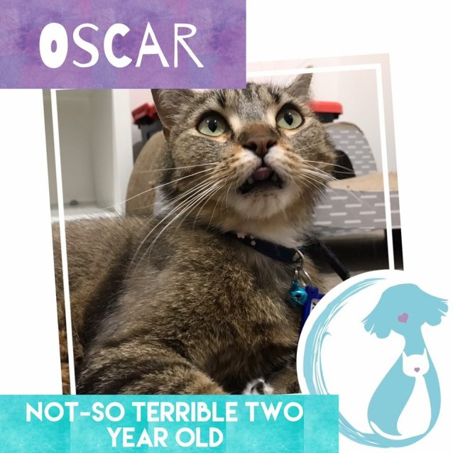 Photo of Oscar *Limited Time Valentines $50 Adoption Fee*