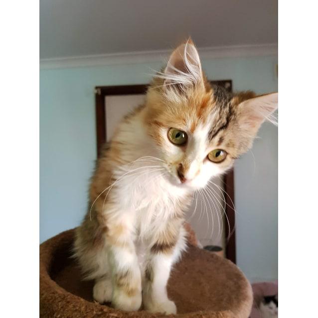 Photo of Jindi
