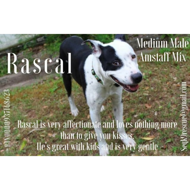 Photo of Rascal