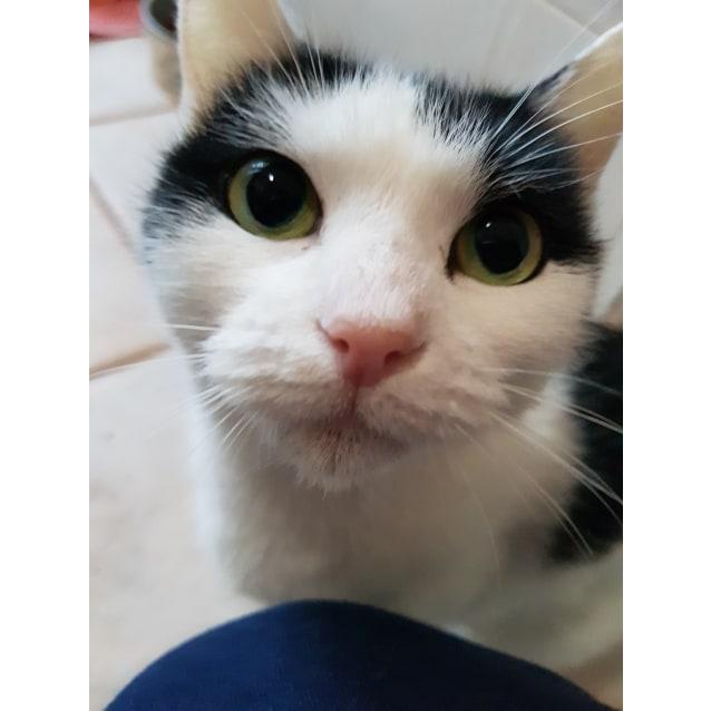 Photo of Poppi