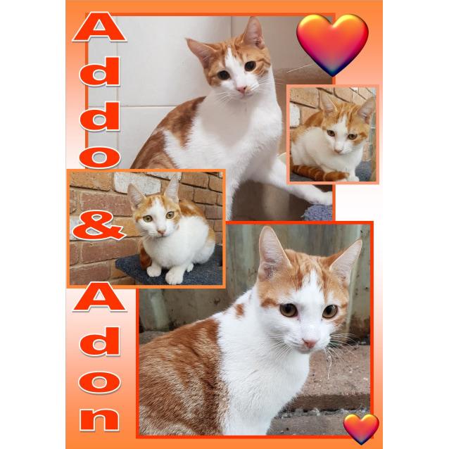 Photo of Addo & Adon