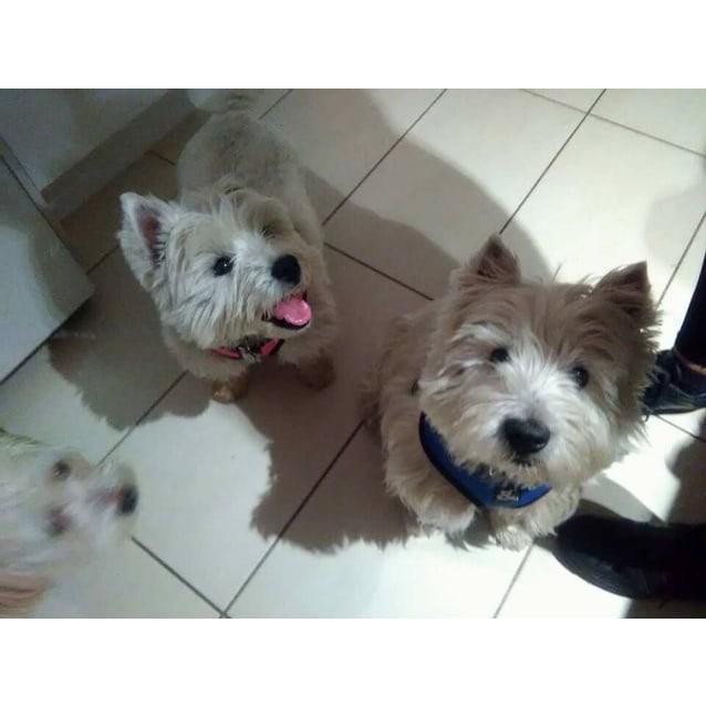 Photo of Leo & Dory