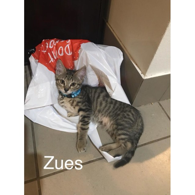 Photo of Zues