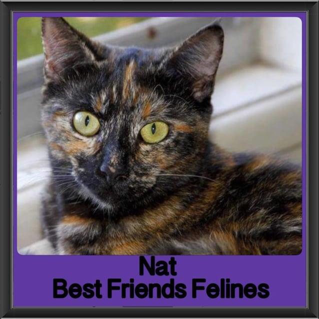 Photo of Nat