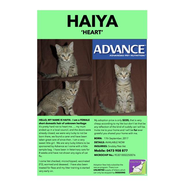 Photo of Haiya