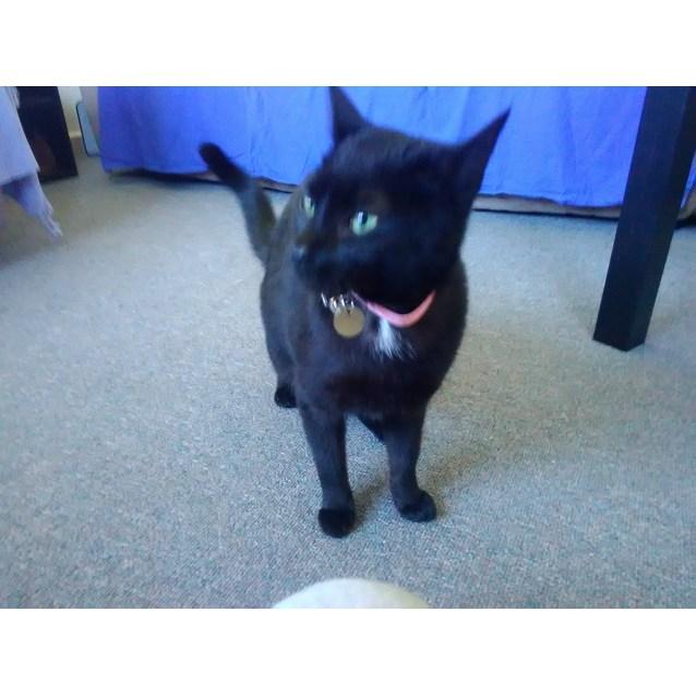 Photo of Meow Meow Ac0070